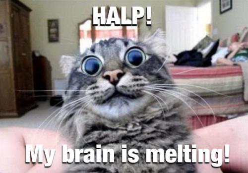 brainMelt